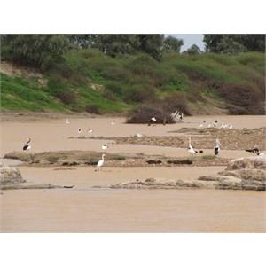 Old Diamantina River Crossing