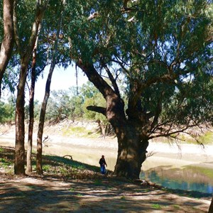 Darling River and red gums at Trilby