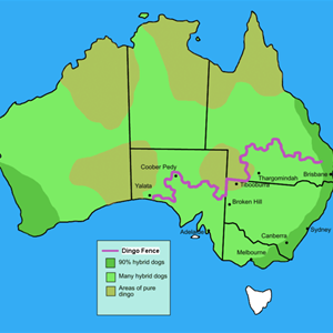Map showing dingo fence