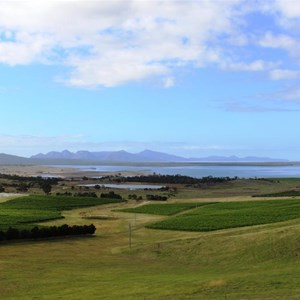 View over the vineyard and to Freycinet Peninsula