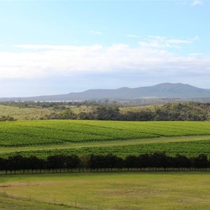 View over the vineyard