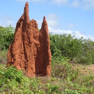 Termite mound midst the scrub