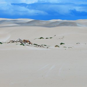 Fowlers Bay Sand Dunes