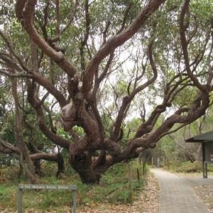 Twisted tree limbs