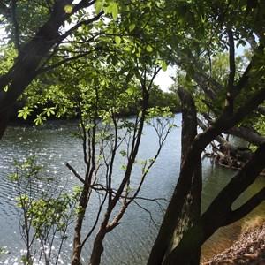 Catfish Lagoon
