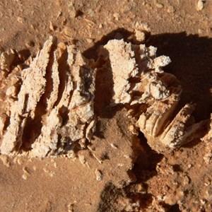 crystals of gypcrete salts