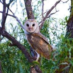 Wildlife, Purni Bore
