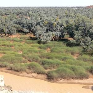 Rounded hummocks of Lignum in Diamantina River, Diamantina Gates, Qld.