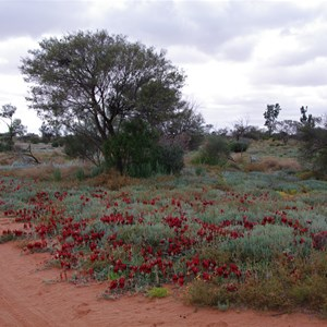 Colours of Roxby Downs - South Australia